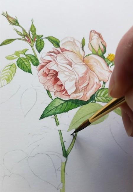 Botanical Illustration on the Botanical Ultra Smooth by Kim Curtis