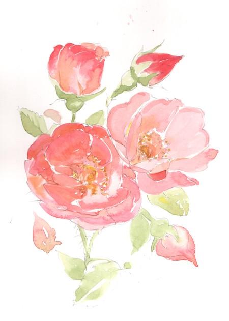 Botanical Watercolour by Peter Taylor Ward