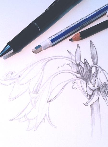 Pencil Drawing in Progress